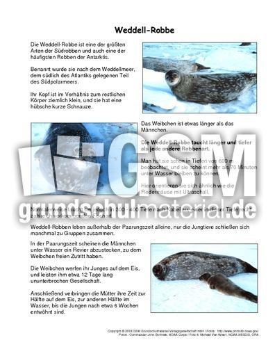 arbeitsblatt vorschule 187 rotkehlchen steckbrief foto