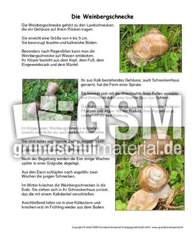 arbeitsblatt vorschule 187 tiersteckbrief grundschule