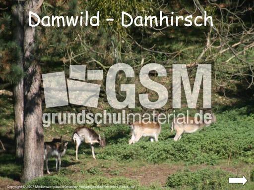 Damhirsch-Damwild-Präsentation - Damhirsch - Damwild ...