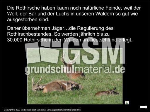 Rothirsch-Rotwild-Präsentation - Rothirsch - Rotwild ...