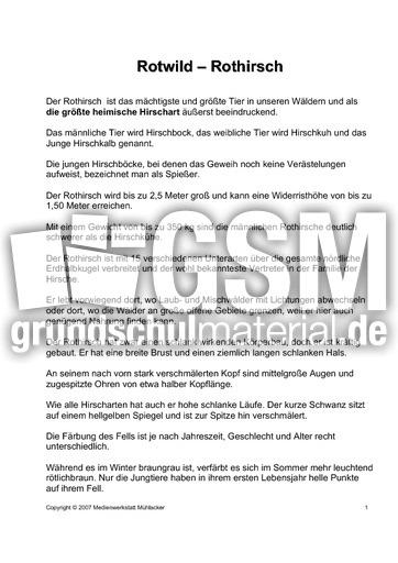 Rothirsch-Rotwild-Text-1 - Rothirsch - Rotwild - Präsentationen ...