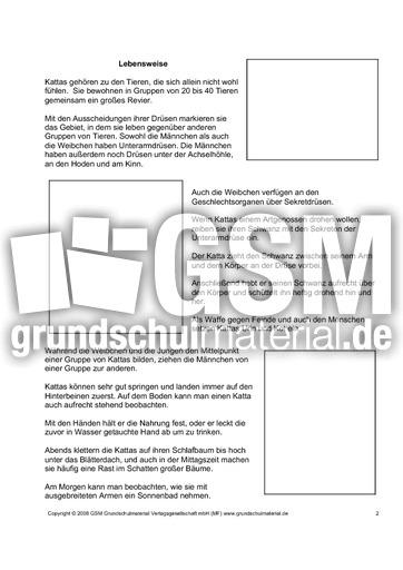 Steckbrief-Katta-Seite-2 - Arbeitsblätter - Kattas - Tiere ...