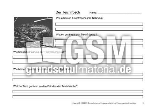 Arbeitsblatt-Teichfrosch-3 - Texte - Teichfrosch - Tiere ...