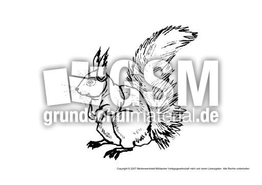 eichhörnchen2  tiere  tiere zum ausmalen  tiere