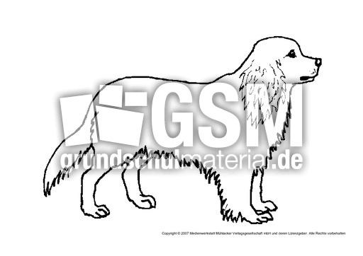 hund6  tiere  tiere zum ausmalen  tiere  sachthemen