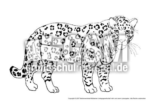 Panther Tiere Tiere Zum Ausmalen Tiere Sachthemen Hus
