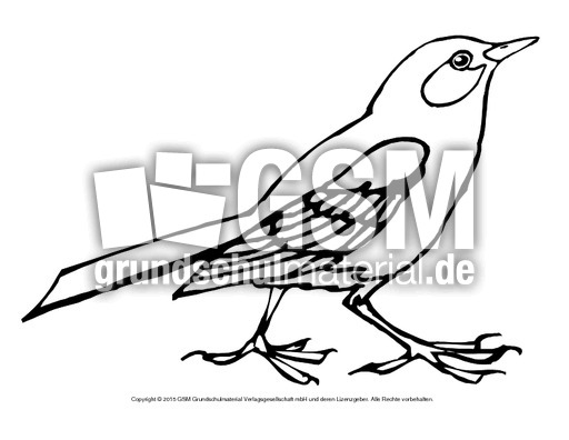ausmalbildamsel  ausmalbildervögel  vögel  tiere