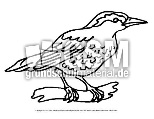 Ausmalbild Drossel Ausmalbilder Vögel Vögel Tiere Sachthemen