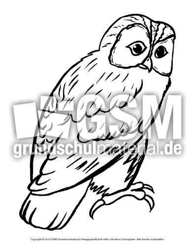 Ausmalbild Eule Ausmalbilder Vögel Vögel Tiere Sachthemen