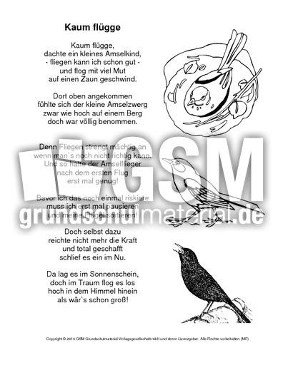 Amselgedicht Kaum Flügge Ausmalbild Gedichte Die Amsel Vögel
