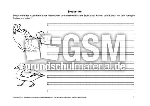 Arbeitsblätter-Stockente-1-6 - Arbeitsblätter - Stockente - Enten ...