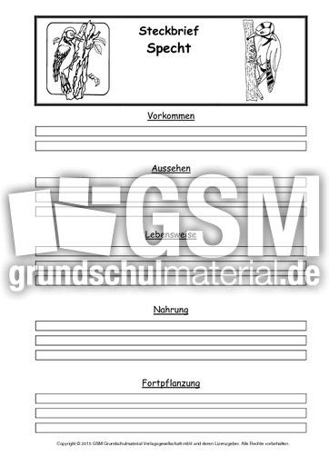 Arbeitsblatt Der Vogel : Steckbriefvorlage specht steckbrief sw