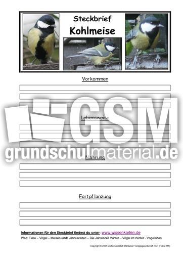 Steckbrief kohlmeise pdf