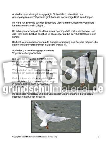 Skelett körperbau organe 2 pdf