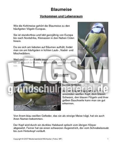 arbeitsblatt vorschule 187 blaumeise steckbrief ebenbild