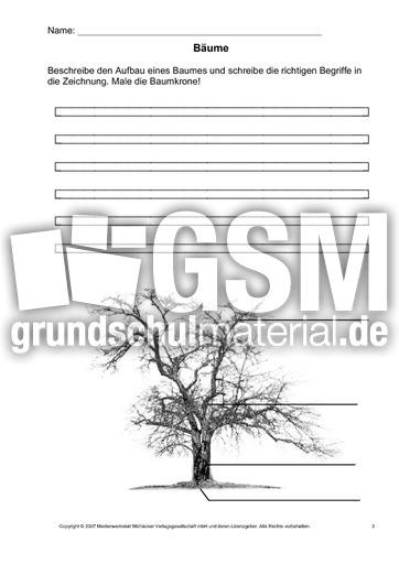 Arbeitsblatt-Bäume-3 - Arbeitsblätter - Bäume - Themen und Projekte ...
