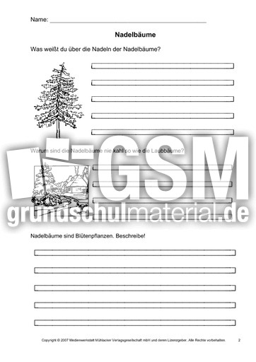Arbeitsblatt-Nadelbäume-2 - Arbeitsblätter - Bäume - Themen und ...