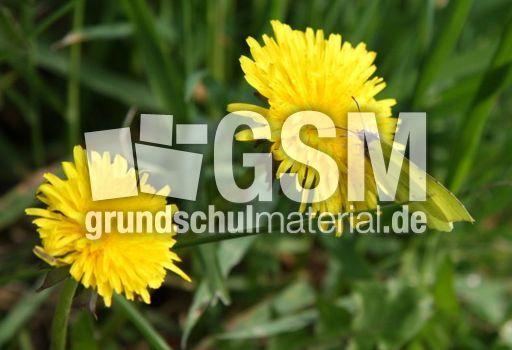 Wiese-Schmetterling-72 - Fotos - Wiese - Lebensraum Wiese ...