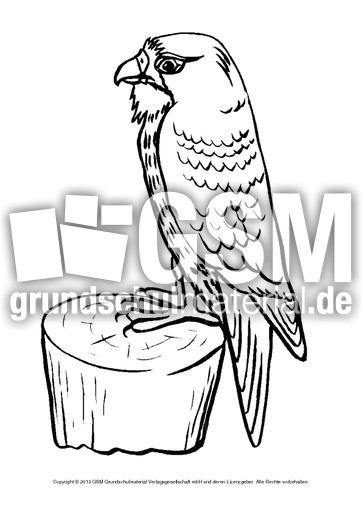 ausmalbildertieredeswaldesb113  waldwerkstatt