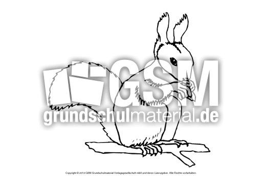 ausmalbilder-tiere-des-waldes-c-1-13 - waldwerkstatt