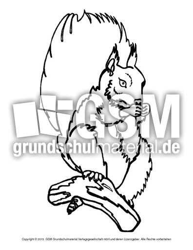 ausmalbildeichhörnchena 10  eichhörnchen  tiere zum