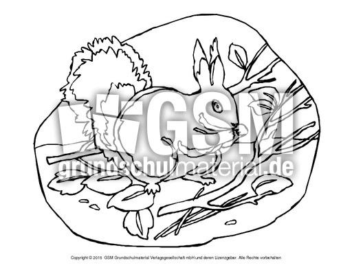 ausmalbildeichhörnchenb 16  eichhörnchen  tiere zum