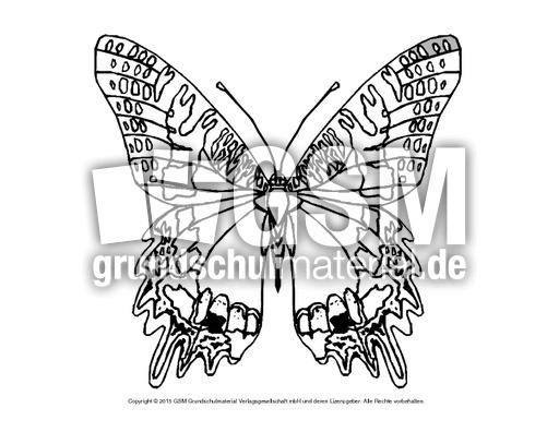 Ausmalbild Schmetterling 8 Schmetterlinge Tiere Zum Ausmalen
