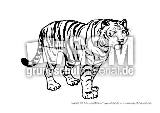 tiger1  tiere gemischt  tiere zum ausmalen