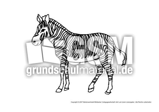 Zebra 1 Tiere Gemischt Tiere Zum Ausmalen Ausmalbilder