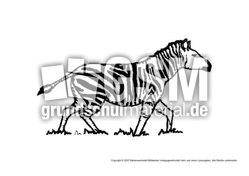 Zebra 3 Tiere Gemischt Tiere Zum Ausmalen Ausmalbilder