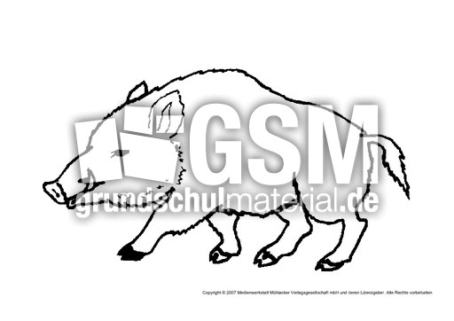 wildschwein  tiere gemischt  tiere zum ausmalen