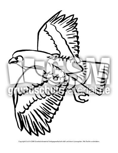Ausmalbild Adler Vögel Tiere Zum Ausmalen Ausmalbilder