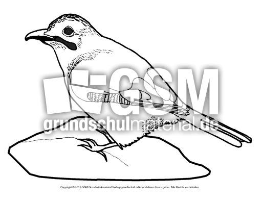 ausmalbildeichelhäher  vögel  tiere zum ausmalen