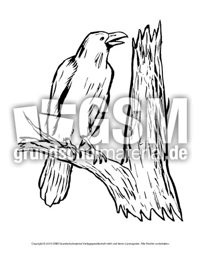 ausmalbildkrähe  vögel  tiere zum ausmalen
