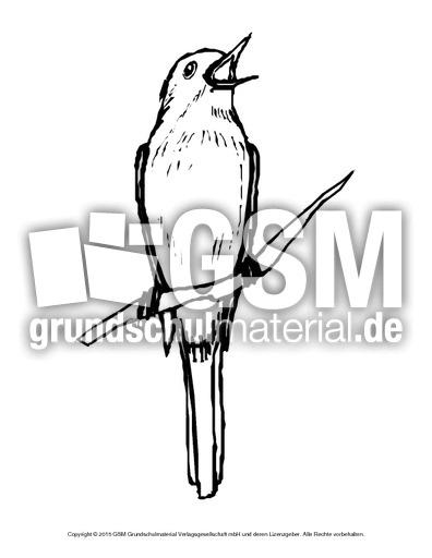 ausmalbildnachtgall  vögel  tiere zum ausmalen