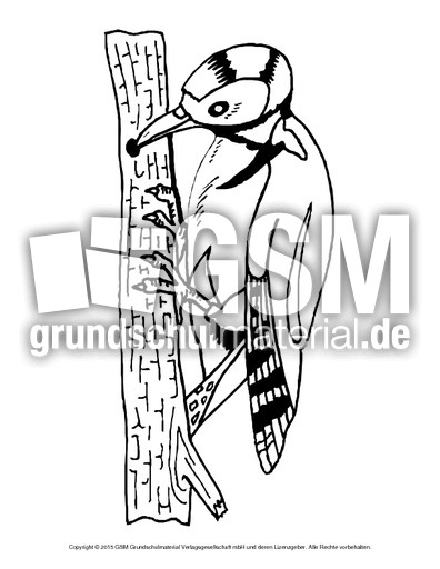 ausmalbildspecht  vögel  tiere zum ausmalen