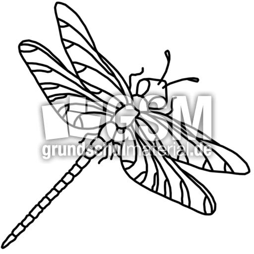 Libelle K P Nomengrafiken Zum Ausmalen Material Klasse 1