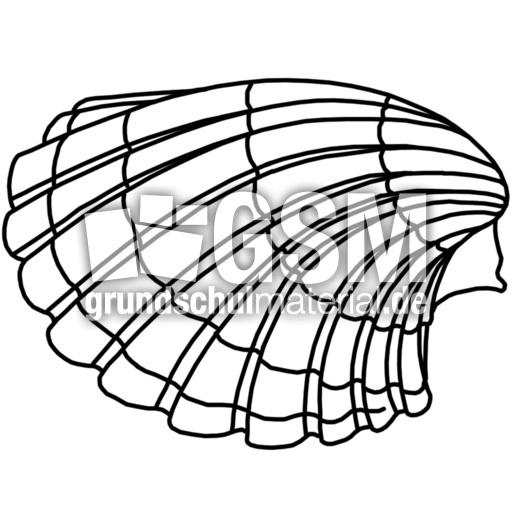Muschel K P Nomengrafiken Zum Ausmalen Material Klasse 1