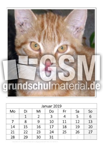 April_Hauskatze.pdf