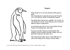 Steckbrief pinguin