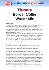 Border Collie - Waschbär.pdf