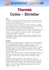 Collie - Stinktier.pdf