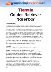 Golden Retriever - Nasenbär.pdf