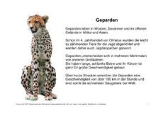 pin geparden steckbrief on pinterest