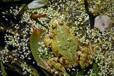 Frosch in der grundschule fotos unterrichtsmaterial - Frosch auf englisch ...