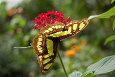 Schmetterling13.JPG