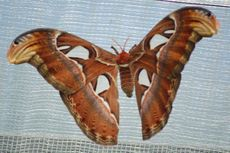 Schmetterling7.JPG