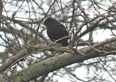 Amsel-Winter-51.jpg