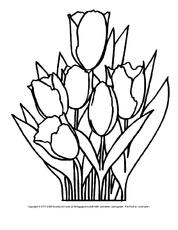 Frühblüher Arbeitsblatt In Der Grundschule Ausmalbilder Blumen