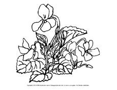Ausmalbilder Blumen